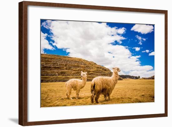 Two Llamas, Sacsayhuaman Ruins, Cusco, Peru, South America-Laura Grier-Framed Photographic Print