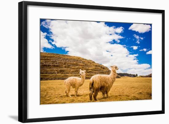 Two Llamas, Sacsayhuaman Ruins, Cusco, Peru, South America-Laura Grier-Framed Photographic Print