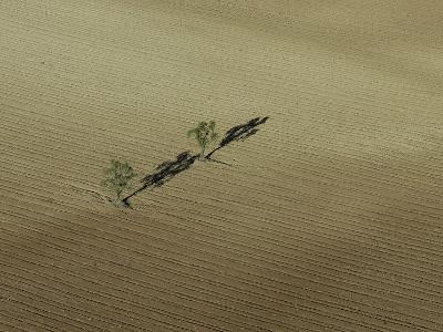 Two Lone Trees Casting Shadows in the Middle of a Plowed Field-Kike Calvo-Photographic Print