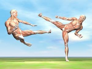 Two Male Musculatures Fighting Martial Arts