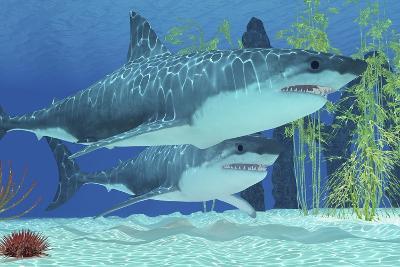 Two Megalodon Sharks from the Cenozoic Era--Art Print