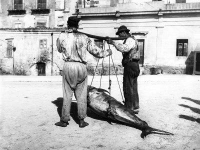 https://imgc.artprintimages.com/img/print/two-men-carrying-a-freshly-caught-tuna-palermo_u-l-q10t1np0.jpg?p=0