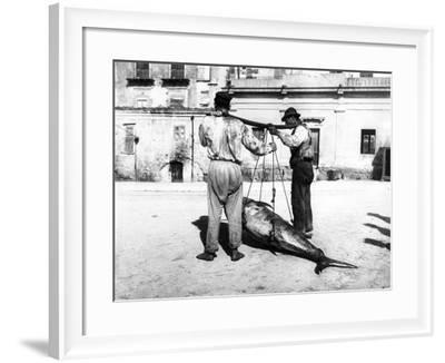 Two Men Carrying a Freshly-Caught Tuna. Palermo--Framed Photographic Print