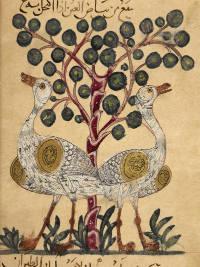 Two Ostriches-Aristotle ibn Bakhtishu-Giclee Print