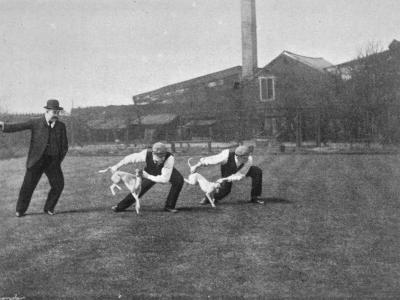 Two Owners Demonstrate How Whippets are Started in a Race : This Is known as 'Flapping'--Photographic Print