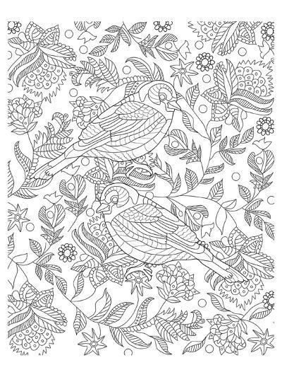 Two Partridges In A Tree Design Coloring Art--Coloring Poster