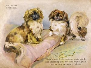 Two Pekingese Dogs and a Pink Cushion