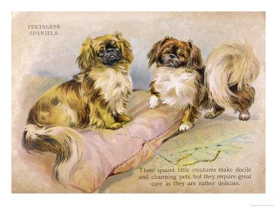 https://imgc.artprintimages.com/img/print/two-pekingese-dogs-and-a-pink-cushion_u-l-ox6nx0.jpg?p=0