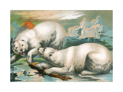 Two Polar Bears Fighting over Seal, 1884--Giclee Print