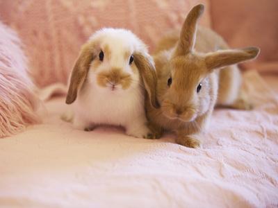 https://imgc.artprintimages.com/img/print/two-rabbits-on-pink-sofa_u-l-pzo4a40.jpg?p=0