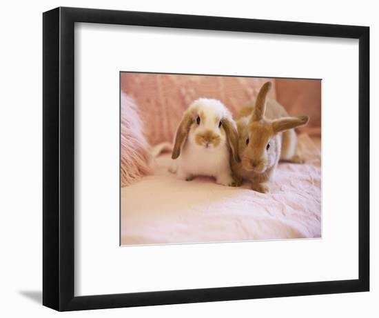 Two Rabbits on Pink Sofa-Jutta Klee-Framed Photographic Print