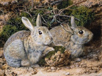 Two Rabbits-John Sherrin-Giclee Print
