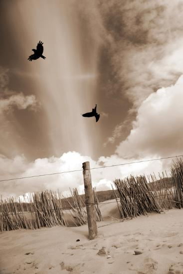 Two Raves Flying over the Dunes in Sepia Tones-Alaya Gadeh-Photographic Print