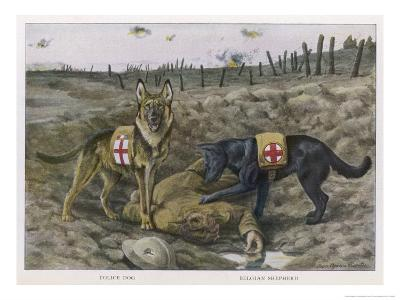 Two Red Cross Rescue Dogs a German Shepherd-Louis Agassiz Fuertes-Giclee Print