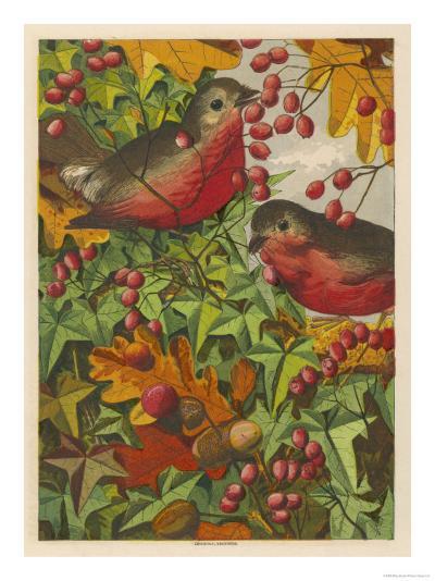 Two Robins Among Berries--Giclee Print