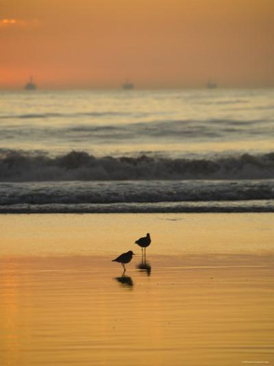 Two Sea Birds Standing in the Surf at Sunset, California-James Forte-Photographic Print