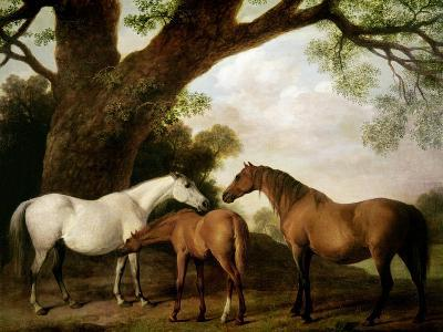 Two Shafto Mares and a Foal, 1774-George Stubbs-Giclee Print