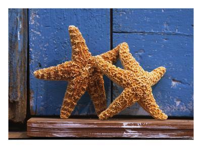 Two Starfish--Photo