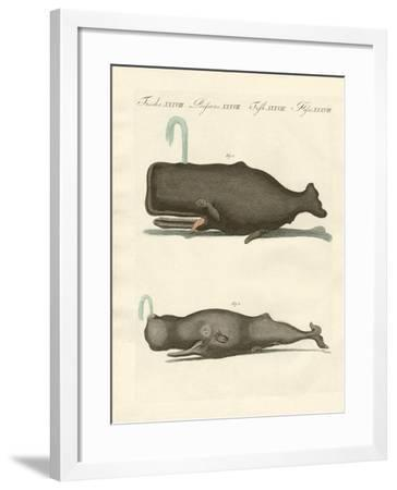 Two Strange Kinds of Whales--Framed Giclee Print