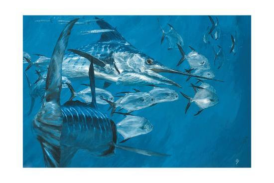 Two Striped Marlin and Pompano, Cabo San Lucas: Striped Marlin Work as a Team to Round Up Pompano-Stanley Meltzoff-Giclee Print