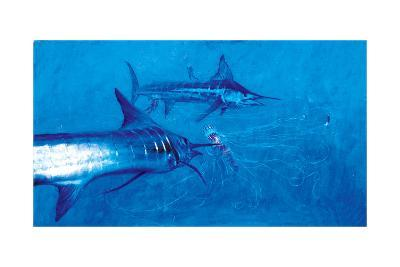 Two Striped Marlin and Three Pelagia Jellyfish, 2004-Stanley Meltzoff-Giclee Print