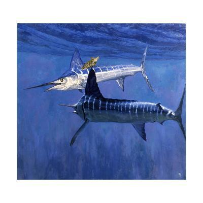 Two Striped Marlin and Turtle-Stanley Meltzoff-Giclee Print
