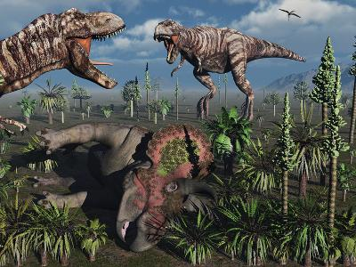 Two T. Rex Dinosaurs Confront Each Other over a Dead Triceratops-Stocktrek Images-Photographic Print