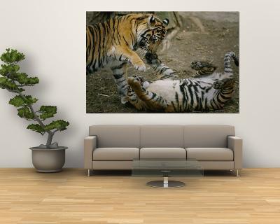 Two Tigers Play Together at the National Zoo-Vlad Kharitonov-Giant Art Print
