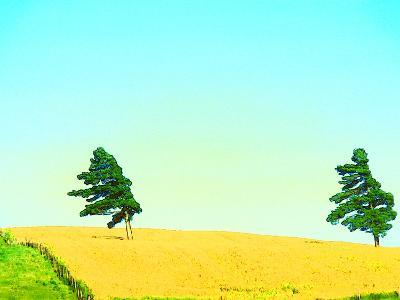 Two Trees in a Field Blowing in the Wind--Photographic Print