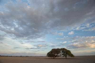 Two Trees Stand Alone in the Barren Red Sand of the Kalahari-Michael Melford-Photographic Print