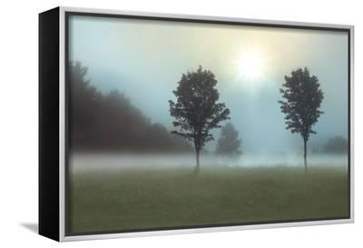 Two Trees & Sunburst-Monte Nagler-Framed Canvas Print