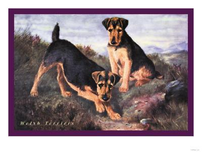 Two Welsh Terriers--Art Print