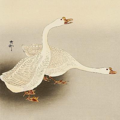 Two White Geese-Koson Ohara-Giclee Print