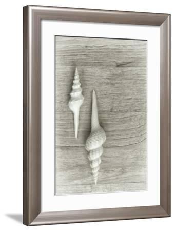 Two White Shells-Cora Niele-Framed Photographic Print