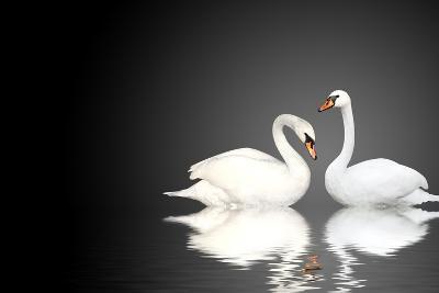 Two White Swans On Black Background-frenta-Art Print