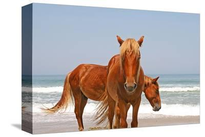 Two wild horses on a beach--Stretched Canvas Print