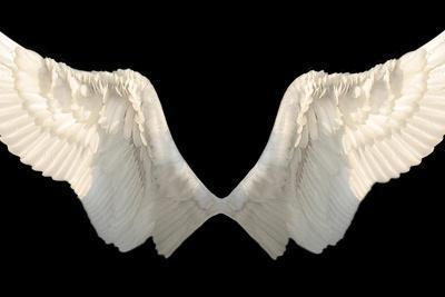 https://imgc.artprintimages.com/img/print/two-wings-isolated_u-l-pn3isg0.jpg?p=0