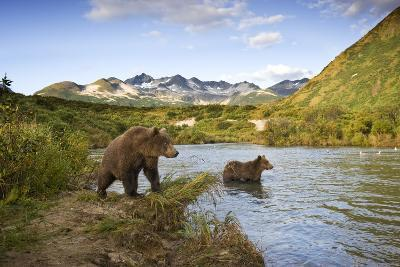 Two Year Old Grizzly Bears on Riverbank at Kinak Bay-Paul Souders-Photographic Print