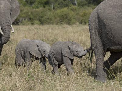 Two Young African Elephant, Masai Mara National Reserve-James Hager-Photographic Print