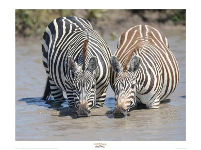 Two Zebras at the Watering Hole-Martin Fowkes-Giclee Print