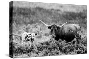 B&W Longhorn II by Tyler Stockton