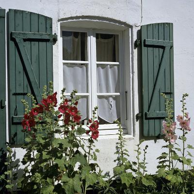 Typical Scene of Shuttered Windows and Hollyhocks, St. Martin, Ile de Re, Poitou-Charentes, France-Stuart Black-Photographic Print