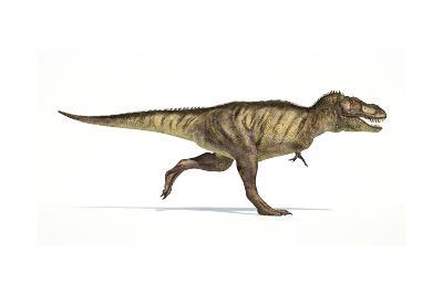 Tyrannosaurus Rex Dinosaur on White Background--Art Print