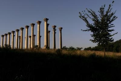 View of Corinthian Columns in National Arboretum by Tyrone Turner