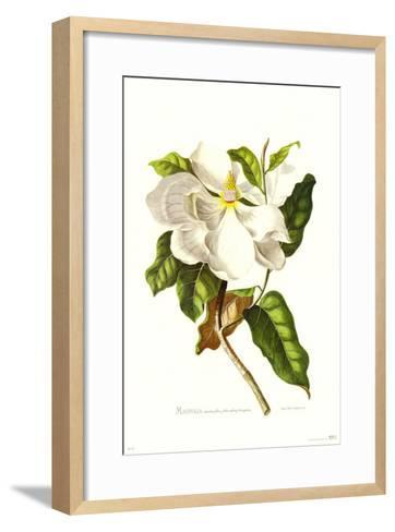 Magnolia Maxime Flore-Georg Dionysius Ehret-Framed Art Print