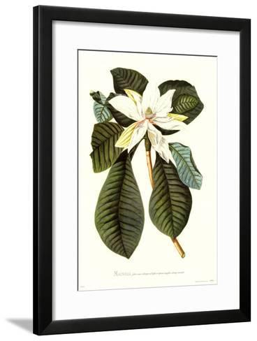 Magnolia Folis Oblongis-Georg Dionysius Ehret-Framed Art Print