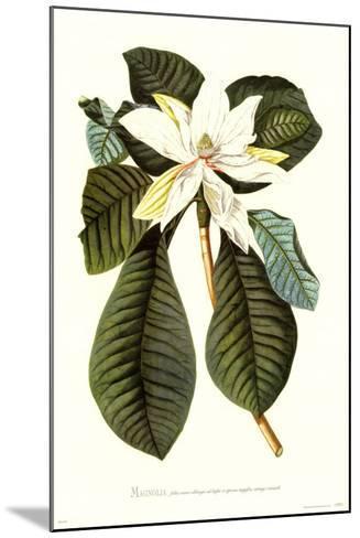 Magnolia Folis Oblongis-Georg Dionysius Ehret-Mounted Art Print