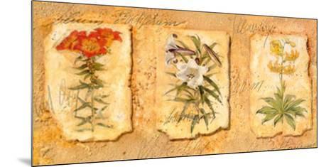 Secret Garden III-Walter Kano-Mounted Art Print