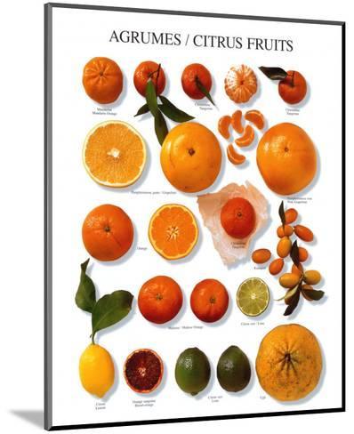 Citrus Fruit--Mounted Art Print