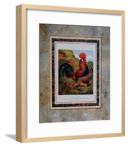 Brown Leg Horn-Cassell's Poultry Book-Framed Art Print